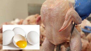 تصویر واکنش فعالان مرغ و تخممرغ به حذف دلار ۴۲۰۰|موافقان:گران میشود ولی مردم مجبورند بخرند/مخالفان:مرغ هم مثل گوشت از سفره میپرد