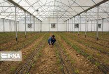 تصویر ۱.۴ هزار میلیارد ریال تسهیلات به بخش کشاورزی استان سمنان پرداخت شد