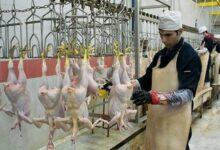 تصویر حقوق و مزایای ناظران شرعی واردات مرغ از ترکیه ابلاغ شد + سند